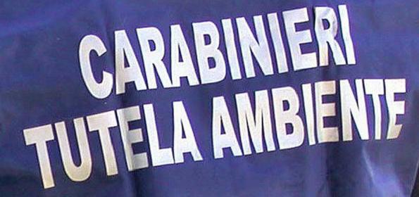 CARABINIERI NOE - VENEZIA * « A LORIA (TV) TROVATI 250 METRI CUBI DI RIFIUTI SPECIALI STOCCATI ILLECITAMENTE, DENUNCIATE 4 PERSONE »