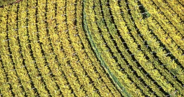 PROVINCIA AUTONOMA TRENTO * LEGGE AGRITURISMO: « APPROVATO DAL CONSIGLIO PROVINCIALE IL DDL, RIORGANIZZATA L'ATTIVITÀ AGRITURISTICA NELL'OTTICA DI SEMPLIFICARE LA NORMATIVA »