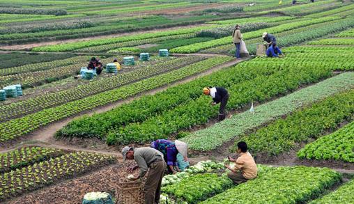 COLDIRETTI * PIL: « RIPRESA ECONOMICA, CON UN BALZO DEL 3,9% DEL VALORE AGGIUNTO NEL 2021 È L'AGRICOLTURA A CRESCERE DI PIÙ TRA I SETTORI PRODUTTIVI »