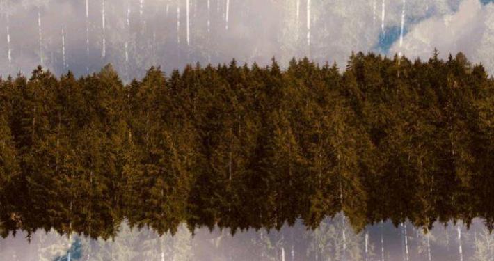 """CASSE RURALE TRENTINE - MUSE - APT VAL DI NON * """" FOREST FRAME - LA FORESTA TRA SOGNO E REALTÀ """": « A CASTEL BELASI LA MOSTRA FOTOGRAFICA DEL MAESTRO MAURIZIO GALIMBERTI, L'INAUGURAZIONE SABATO 17 LUGLIO »"""